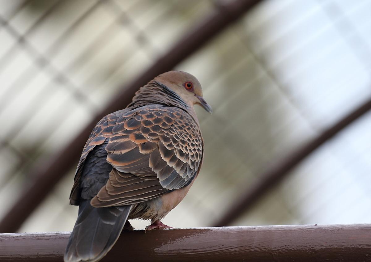 宮古島の野鳥-1_c0113597_14291398.jpg