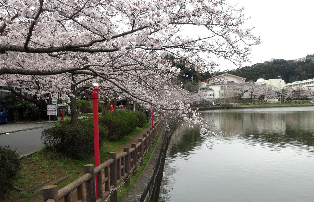 孫娘たちと八鶴湖の花見へ_b0114798_16295694.jpg