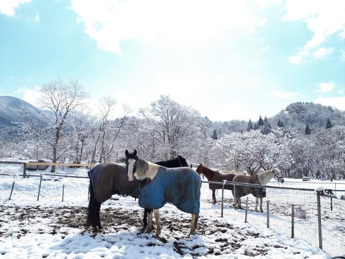 雪はもういいよー!_e0186499_20560513.jpg