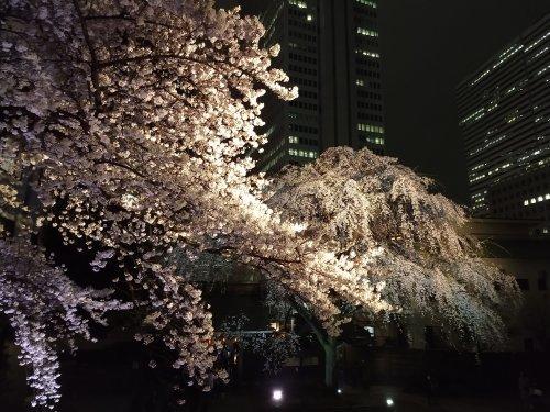 花冷え、桜_a0057402_21100593.jpg