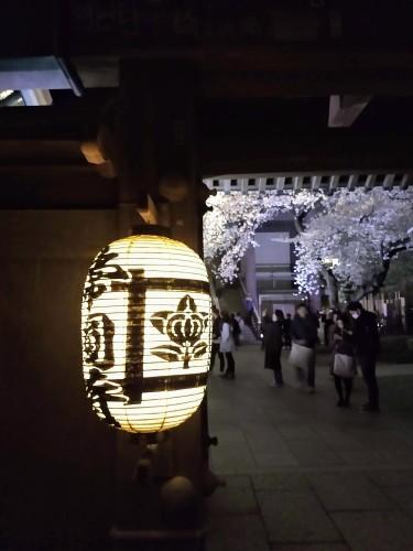 花冷え、桜_a0057402_21133066.jpg