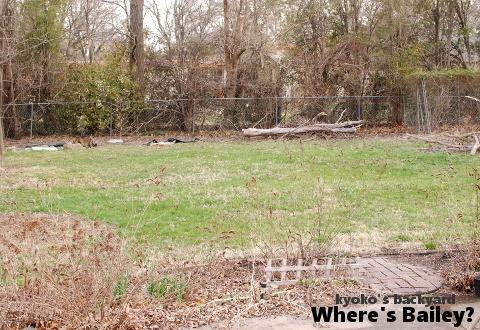 Baileyを探せ!2019春 / 裏庭で見かけたキツツキ_b0253205_06023641.jpg