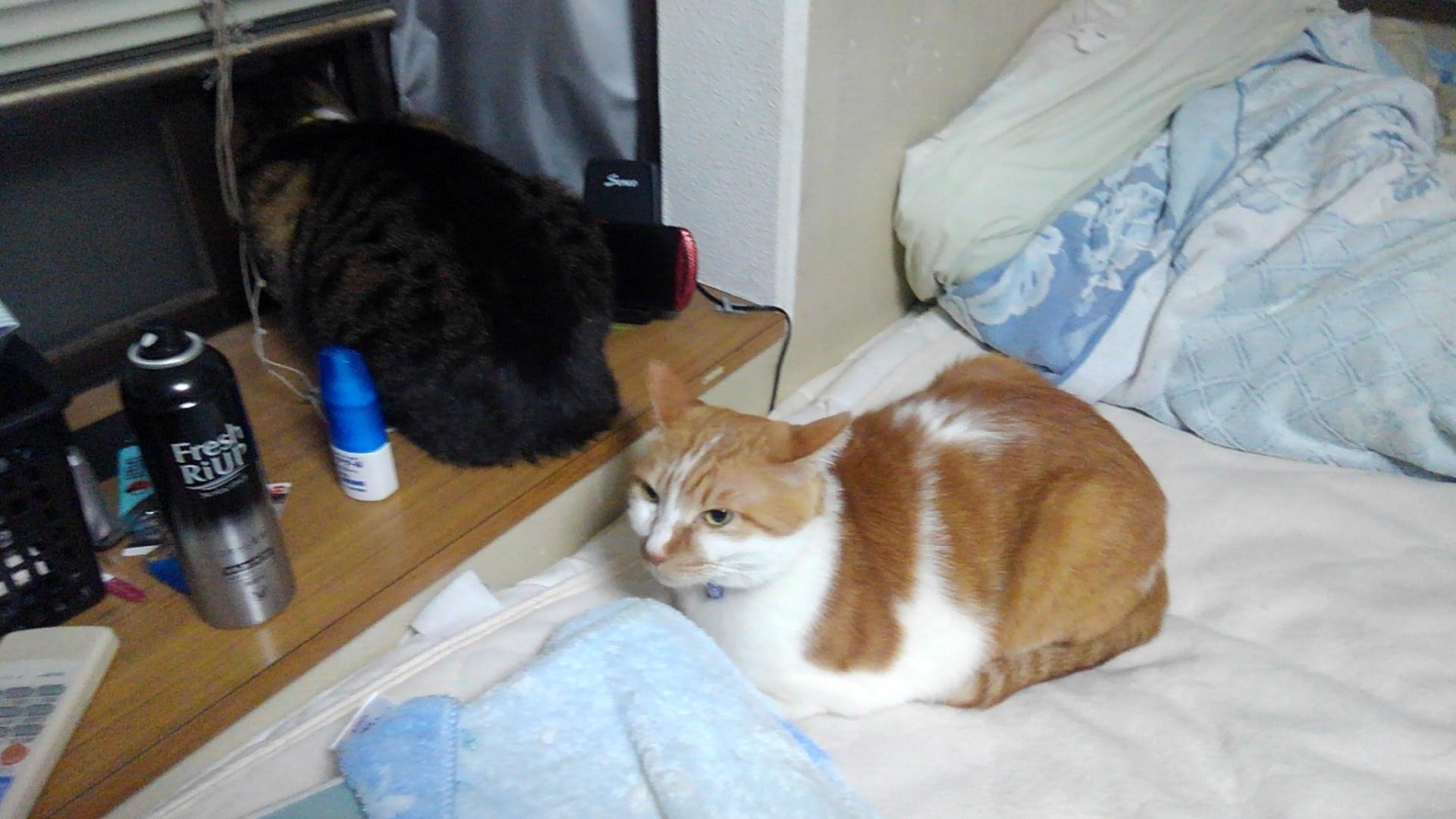【猫】二匹の距離が…_f0141609_14532162.jpg