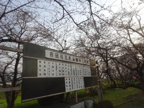 西条市 小松中央公園、吉田河原、久妙寺の桜巡り3分咲と追記で見頃の満開…2019/3/29_f0231709_02552469.jpg