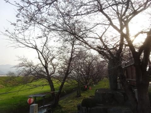 西条市 小松中央公園、吉田河原、久妙寺の桜巡り3分咲と追記で見頃の満開…2019/3/29_f0231709_03200557.jpg