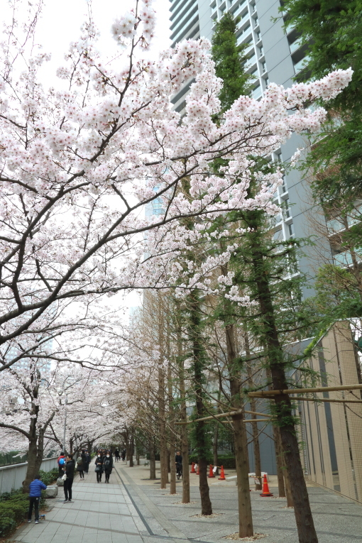 目黒川の桜_b0190710_16503612.jpg