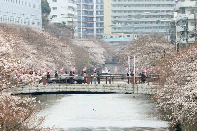 目黒川の桜_b0190710_16503645.jpg