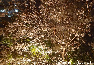 2019/03/28 「奏づ」観桜会_c0156212_12215460.jpg