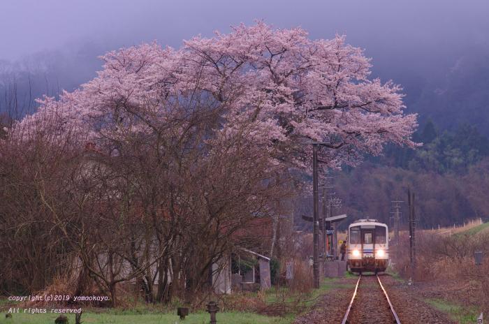 石見簗瀬の大きな桜_d0309612_00204118.jpg