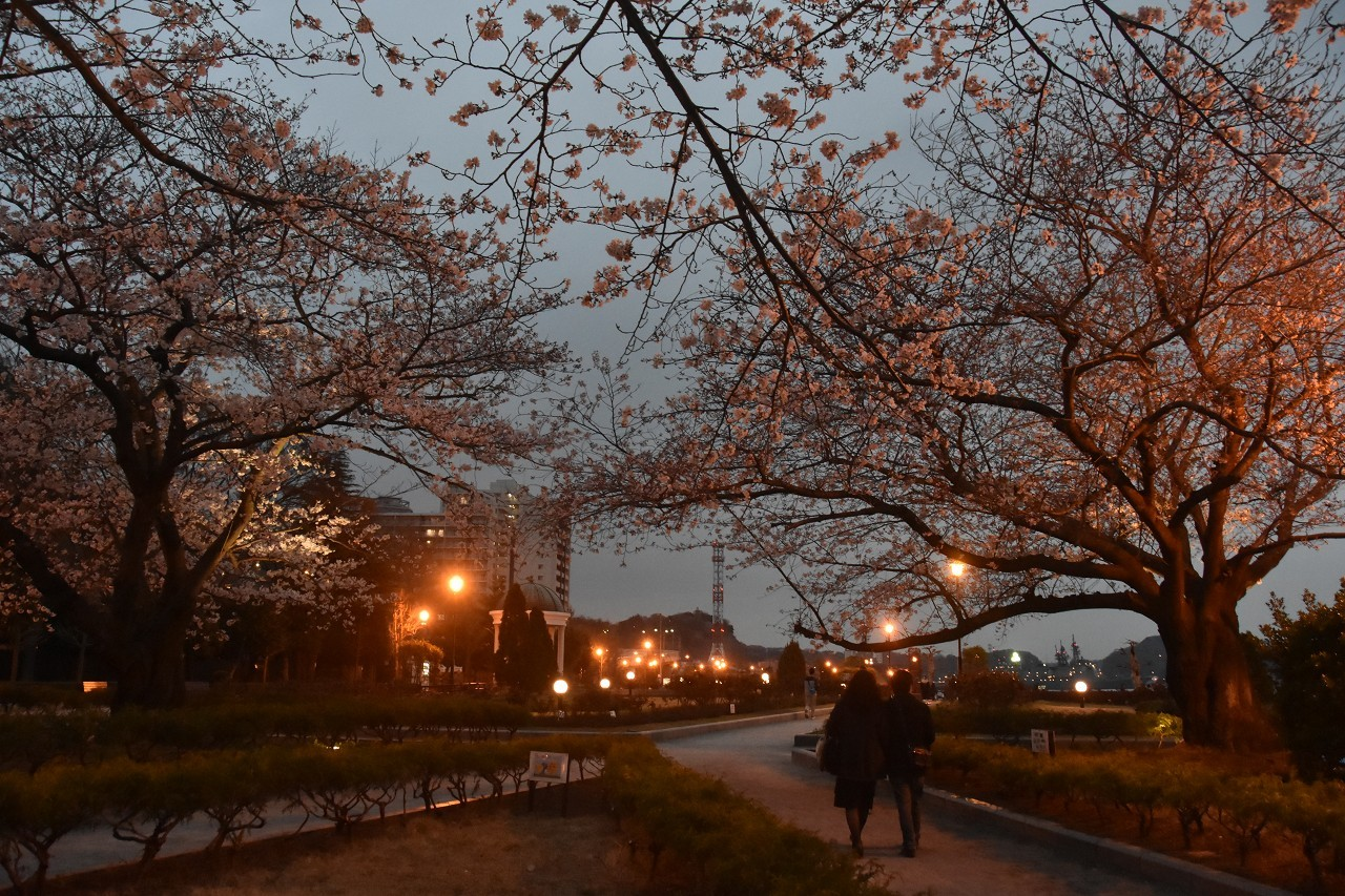 桜 2019 ヴェルニー公園 4_d0065116_22323893.jpg