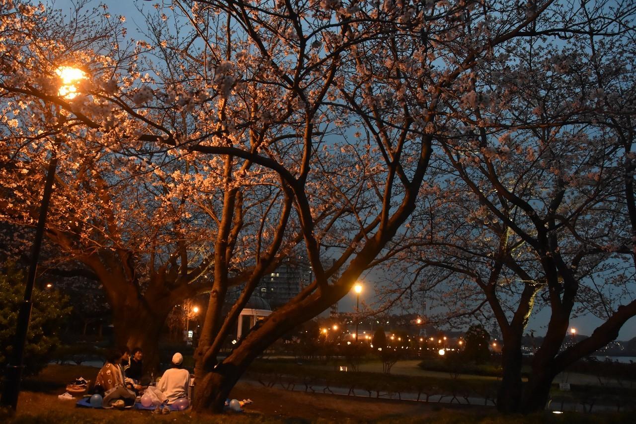 桜 2019 ヴェルニー公園 4_d0065116_22365931.jpg