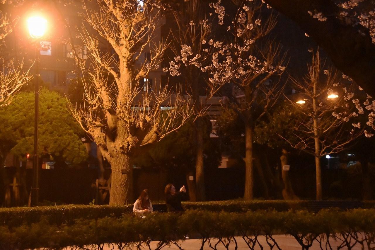 桜 2019 ヴェルニー公園 4_d0065116_22414581.jpg