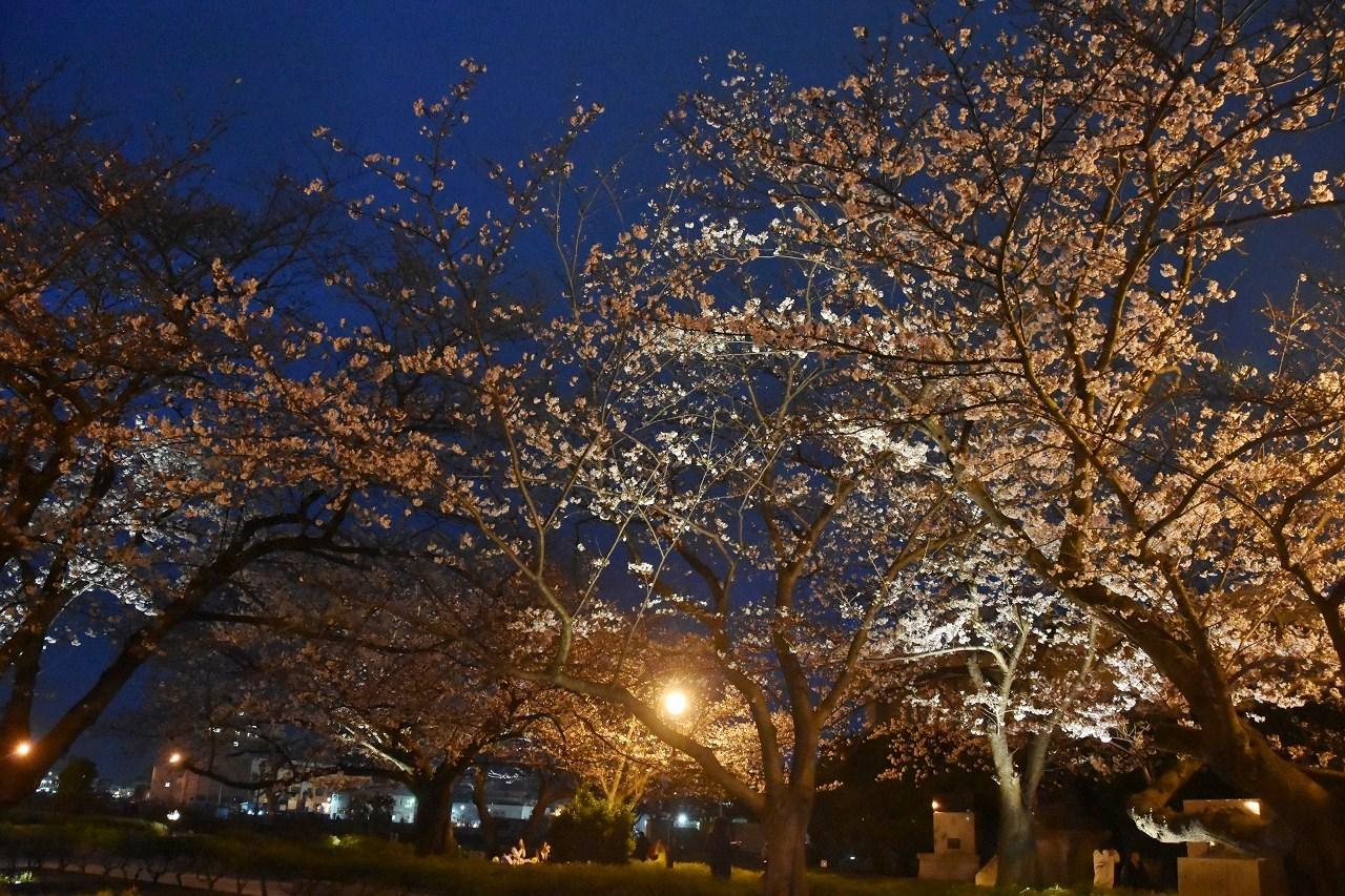 桜 2019 ヴェルニー公園 4_d0065116_22430508.jpg