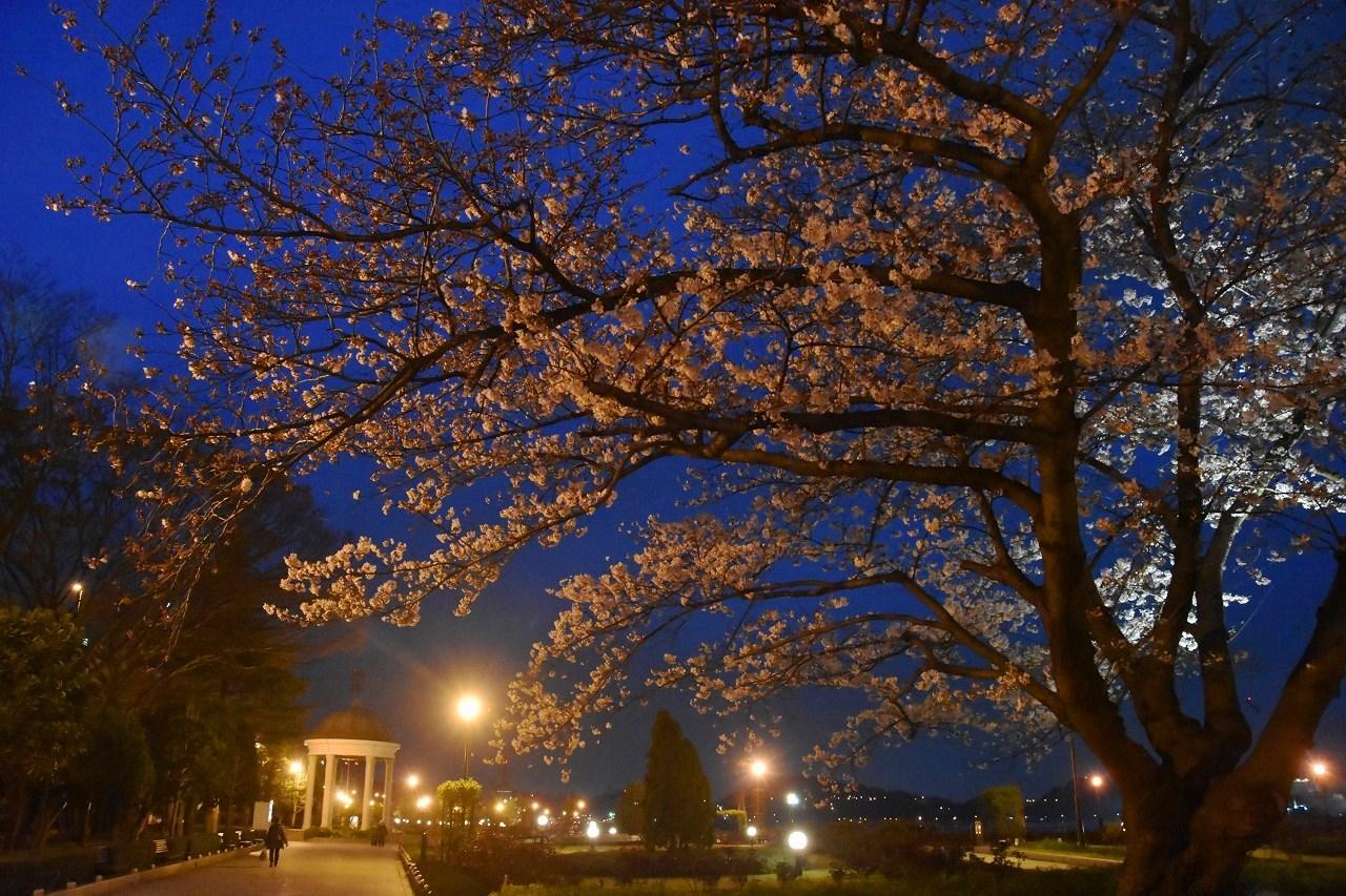桜 2019 ヴェルニー公園 4_d0065116_22434908.jpg