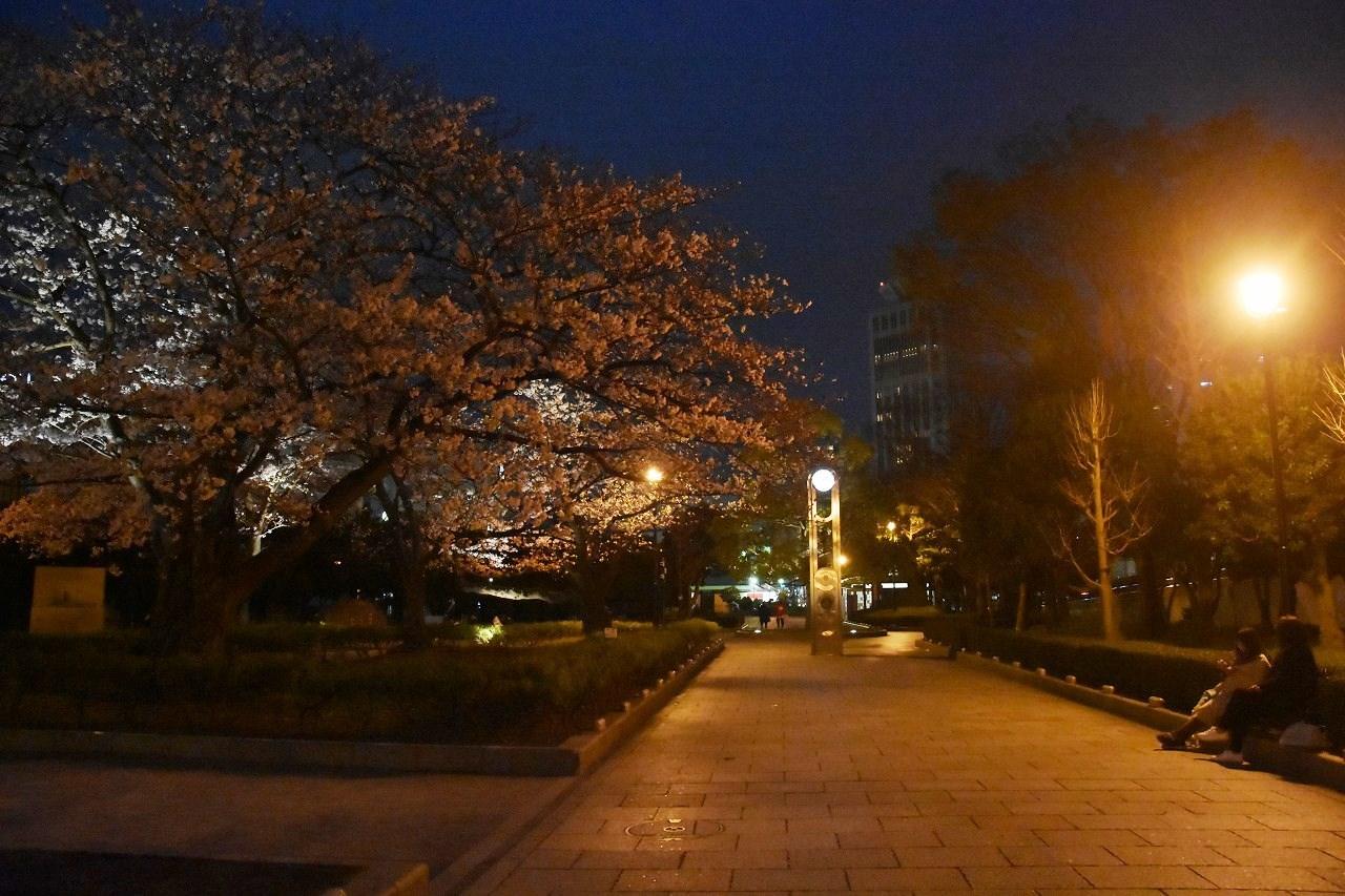 桜 2019 ヴェルニー公園 4_d0065116_22443057.jpg