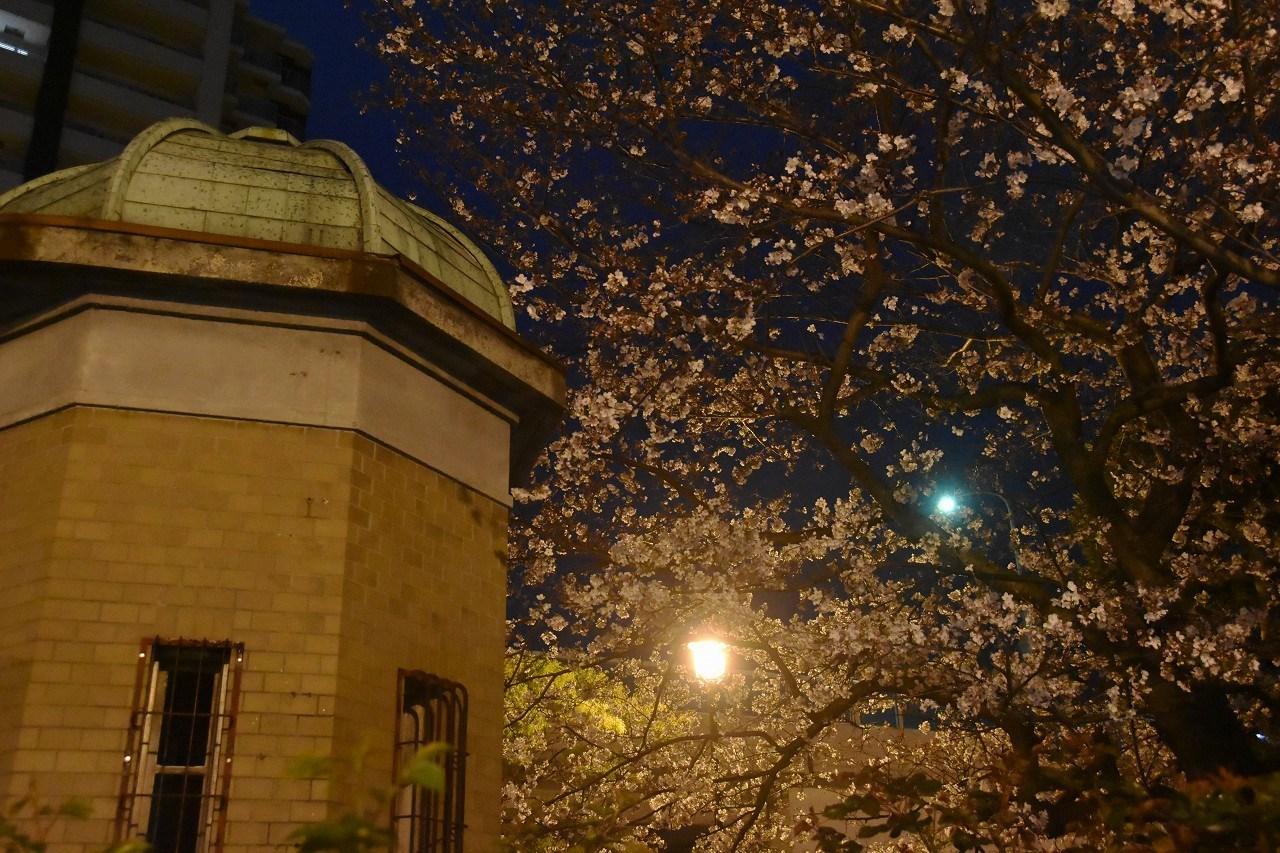 桜 2019 ヴェルニー公園 4_d0065116_22461545.jpg