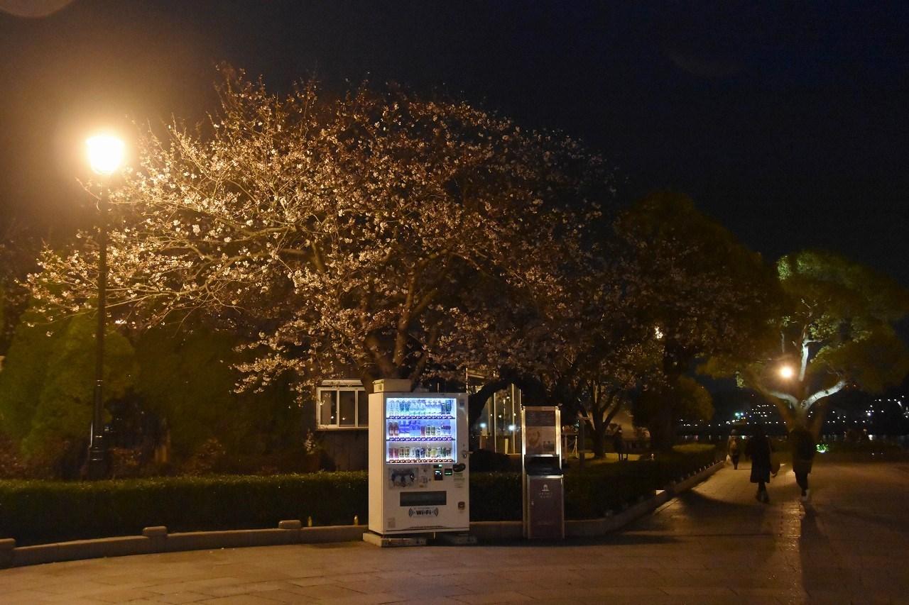 桜 2019 ヴェルニー公園 4_d0065116_22464413.jpg