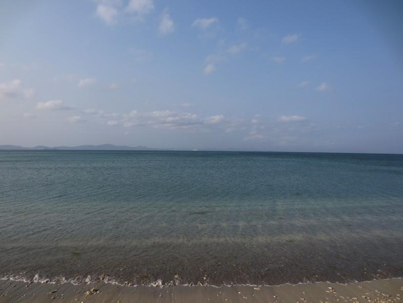 ■辺野古海岸で宝貝を探す――沖縄米軍基地ツアー_d0190217_21302367.jpg