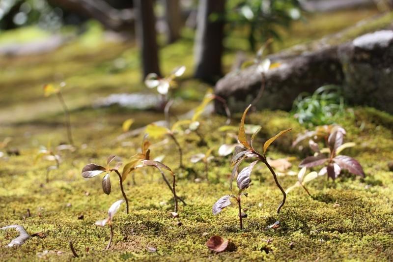 喜楽亭で楽しむ おいしい日本茶 3月_b0220318_07054039.jpg