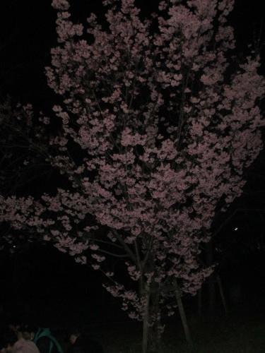 ユトリート教室 花見パーティ_e0175020_18275705.jpg