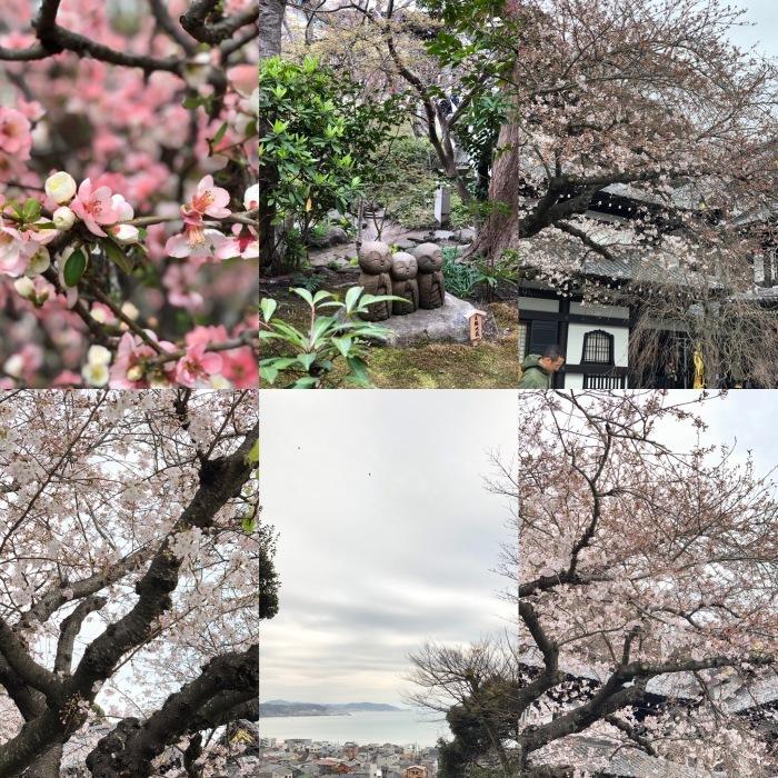 和菓子作りと鎌倉長谷散策_a0169924_10093251.jpeg