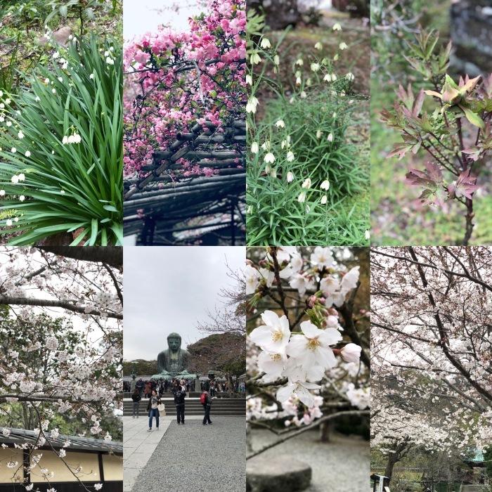 和菓子作りと鎌倉長谷散策_a0169924_10094302.jpeg