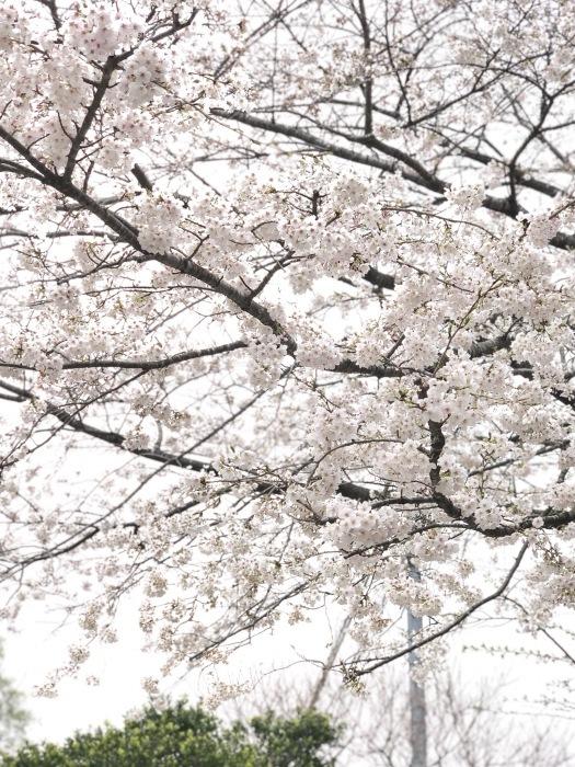 和菓子作りと鎌倉長谷散策_a0169924_10365115.jpeg