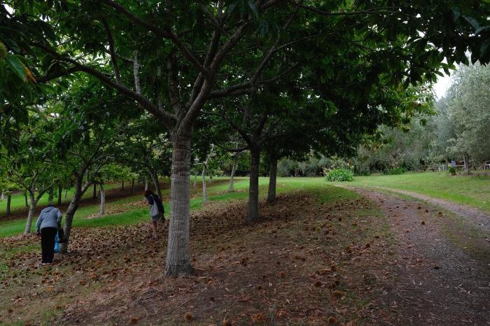 栗拾いに行きました/ Chestnut Picking with Slow Food Friends_e0310424_14301983.jpg