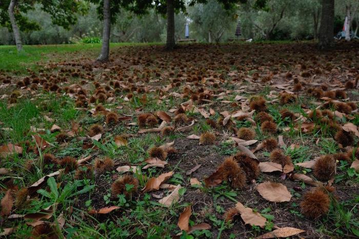 栗拾いに行きました/ Chestnut Picking with Slow Food Friends_e0310424_14304963.jpg