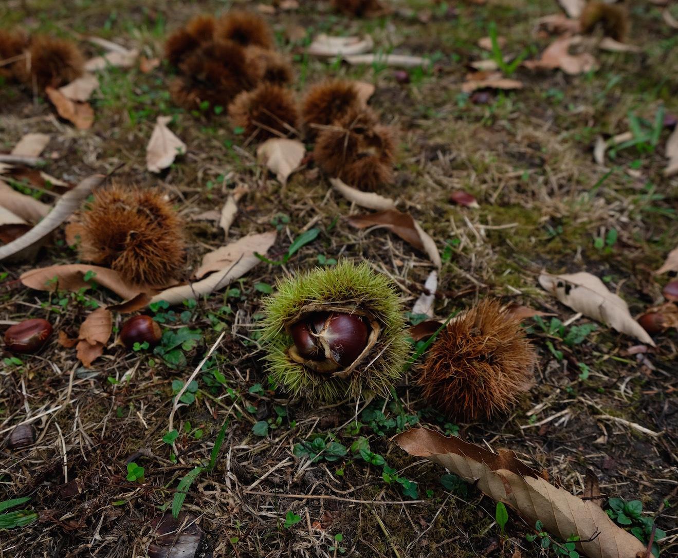 栗拾いに行きました/ Chestnut Picking with Slow Food Friends_e0310424_14305996.jpg