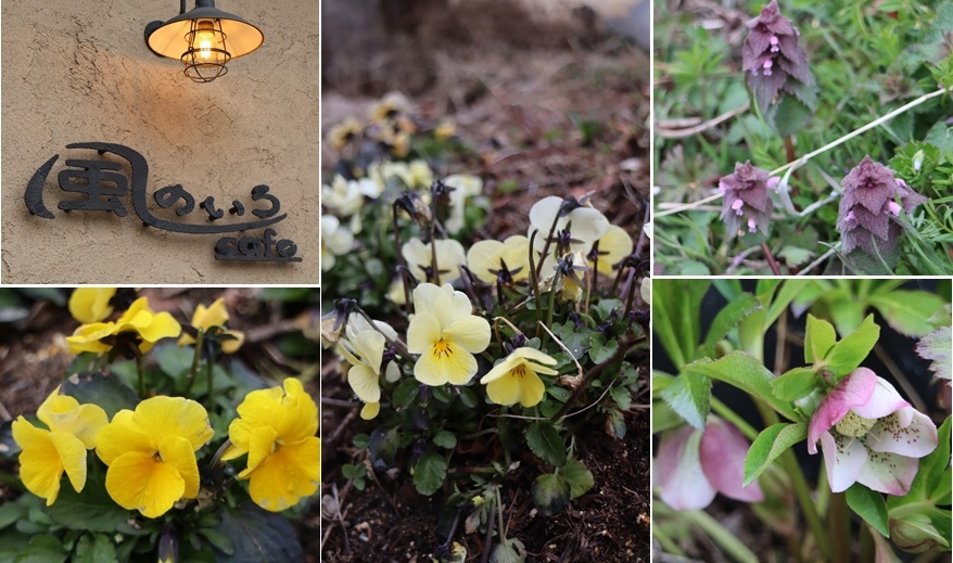 庭に来た春_a0212730_15340761.jpg