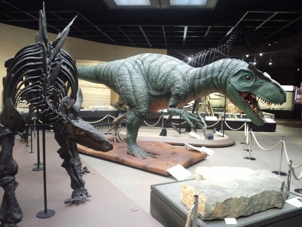 「栃木県立博物館」はすごい!!_d0228130_13382217.jpg
