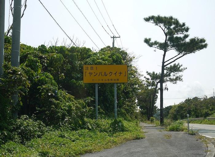 沖縄本島北へゆく旅5 比地の神アシャギ_e0359436_13314853.jpg