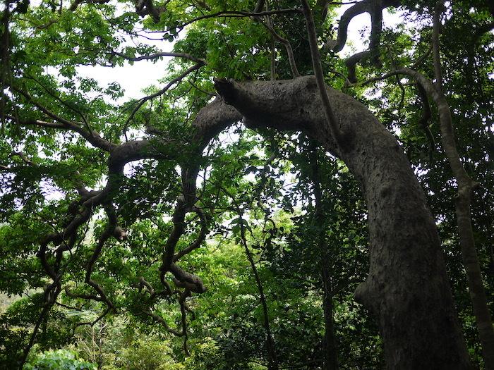 沖縄本島北へゆく旅5 比地の神アシャギ_e0359436_13552633.jpg