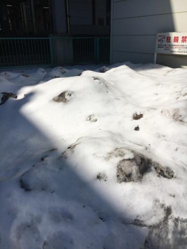 食品売り場パトロール in 札幌_b0346442_21580697.jpeg