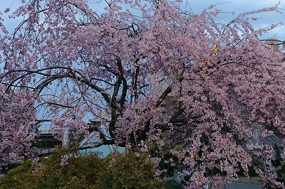 3月は終わりの季節_b0122645_02001487.jpg
