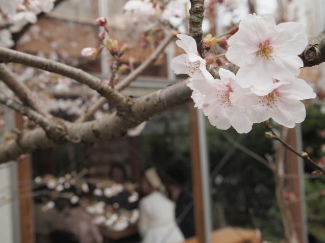 20190330 円山生活の会「円山ステッチの桜でお花見会」_d0145345_21470410.jpg