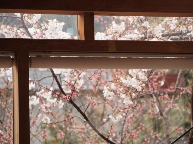 20190330 円山生活の会「円山ステッチの桜でお花見会」_d0145345_21550203.jpg