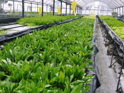 水耕栽培の新鮮野菜 朝採り新鮮野菜を即日発送!無農薬栽培の生野菜!今なら全商品がそろってます!_a0254656_17224578.jpg