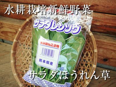 水耕栽培の新鮮野菜 朝採り新鮮野菜を即日発送!無農薬栽培の生野菜!今なら全商品がそろってます!_a0254656_17260281.jpg
