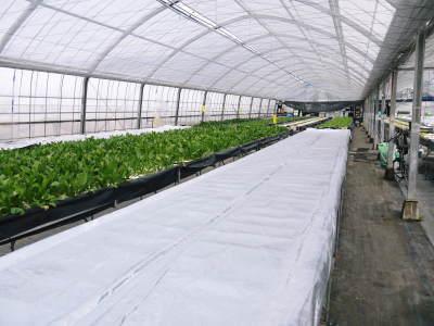 水耕栽培の新鮮野菜 朝採り新鮮野菜を即日発送!無農薬栽培の生野菜!今なら全商品がそろってます!_a0254656_17531008.jpg