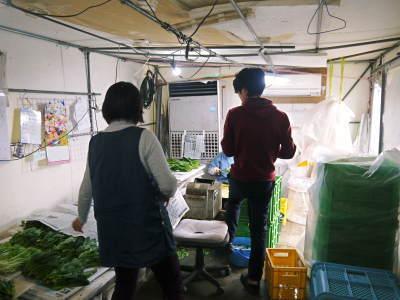 水耕栽培の新鮮野菜 朝採り新鮮野菜を即日発送!無農薬栽培の生野菜!今なら全商品がそろってます!_a0254656_18060415.jpg
