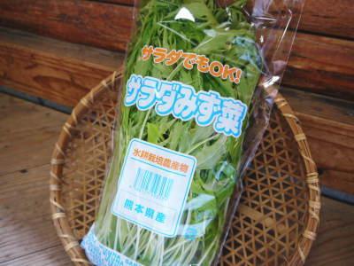 水耕栽培の新鮮野菜 朝採り新鮮野菜を即日発送!無農薬栽培の生野菜!今なら全商品がそろってます!_a0254656_18130518.jpg