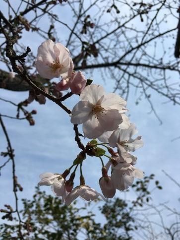 3月30日臨時休業のお知らせ_c0227958_07341222.jpg
