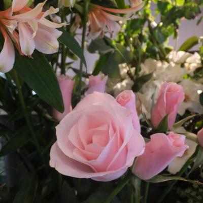 オークリーフ(市川バラ園さんのバラたち)_f0049672_11401473.jpg