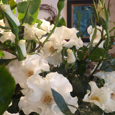 オークリーフ(市川バラ園さんのバラたち)_f0049672_11401802.jpg