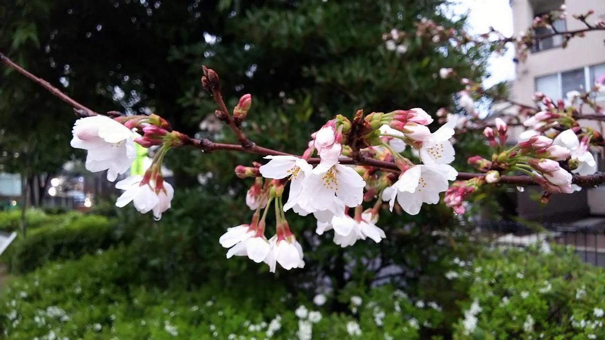 咲いてる~~~_c0057390_20220266.jpg