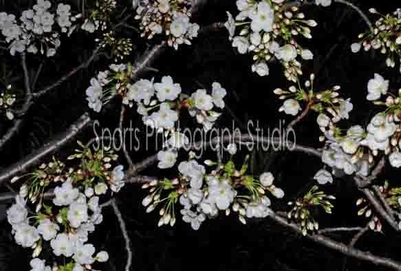 d0256494_20082219.jpg