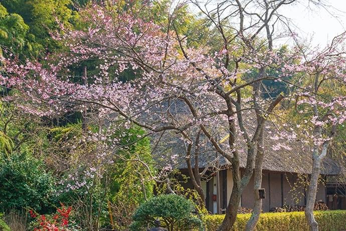 鎌倉・龍宝寺と久成寺の桜_b0145398_23164377.jpg