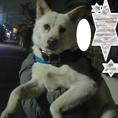 【犬・移動先募集】多頭崩壊引き取りの子たち_f0242002_22364527.jpg